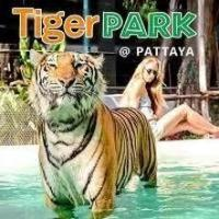 タイガーパーク【TIGER PARK PATTAYA】